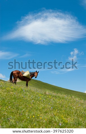 Horse with load on a meadow in the mountains, Russia