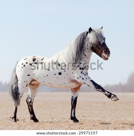 Horse with raised leg in field - stock photo