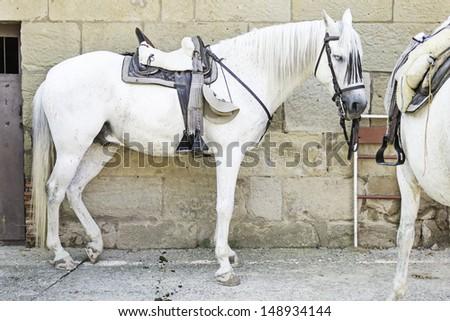 Horse with saddle on urban street, animals and horses - stock photo