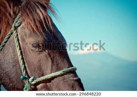 Horse with the Cotopaxi volcano, landscape in the highlands of Ecuador. - stock photo