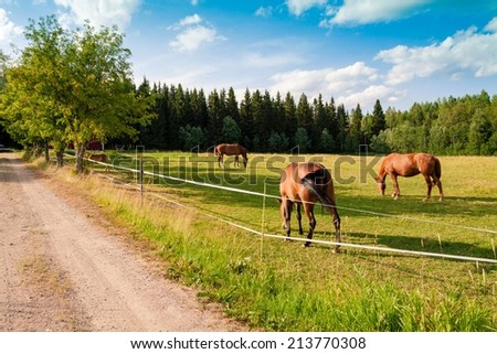 Horses and foal grazing in a pasture in a horse farm - stock photo
