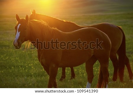 Horses and Sunset - Somewhere in Wyoming, USA. Animals Photo Collection - stock photo