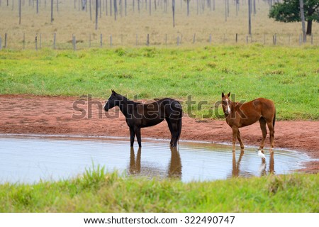 horses and the lake