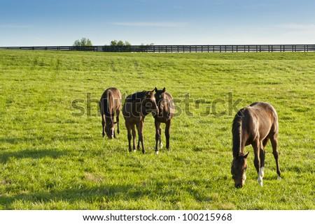 Horses at farmland in Kentucky - stock photo