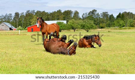 Horses at horse farm. Country landscape. Happy life - stock photo