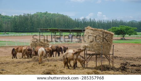 Horses at horse farm. Country landscape. In the pasture - stock photo