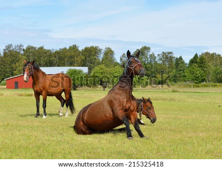 Horses at horse farm. Country landscape. Sitting horse