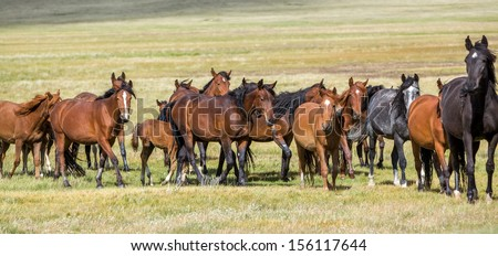 Horses at pasture in the field - stock photo