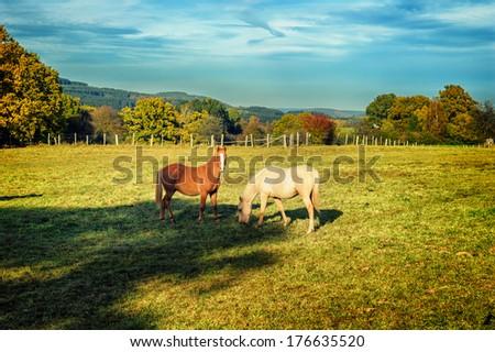 Horses at summer farm field  - stock photo