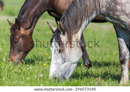 Horses at the pasture.