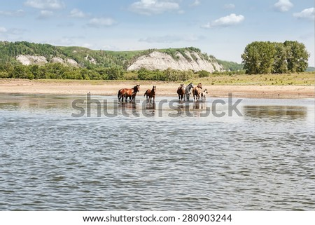Horses at the river on mountains and blue sky background
