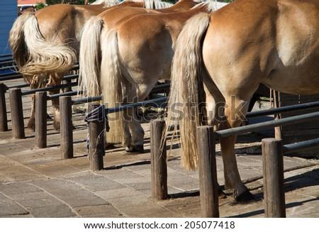Horses back on a farm - stock photo