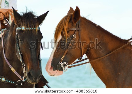 Horses black and tan on the beach.