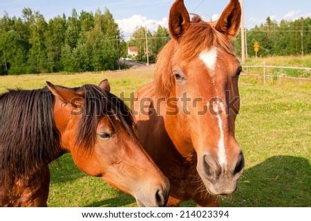 Horses close-up on a farm - stock photo