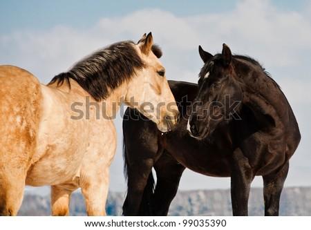 horses communicating - stock photo