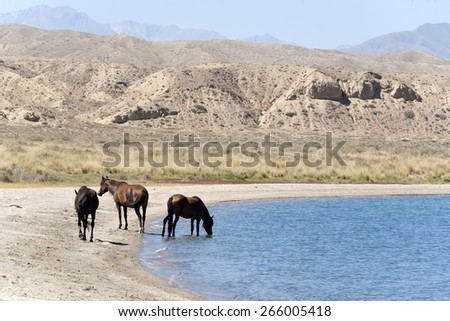 Horses drinking water from the lake - stock photo