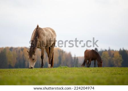 Horses eating - stock photo