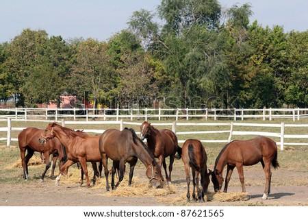 horses eating hay farm scene - stock photo
