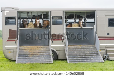 horses eating of a feedbag hanging in a truck horse trailer - stock photo