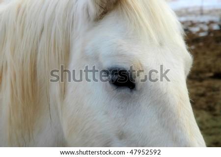 Horses Face - stock photo