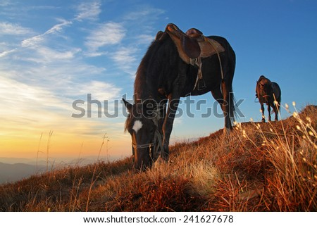 Horses feeding on mountain pasture at sunset - stock photo