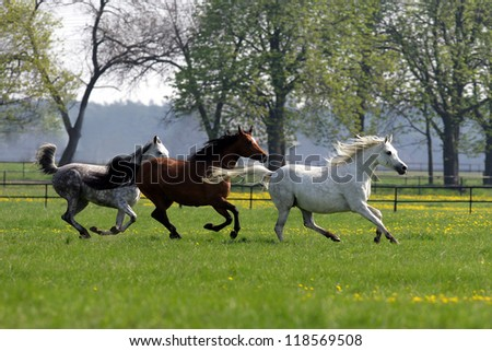 horses galloping in the woods - stock photo