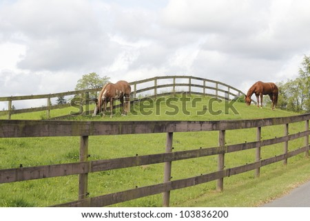 Horses graze on a hilly knoll/Horses Graze/Two horses graze in a grassy pasture - stock photo
