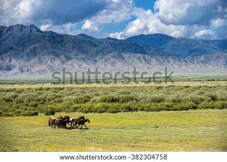 Horses graze on mountain. Almaty region. Kazakhstan - stock photo