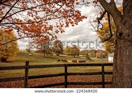 Horses graze on the farm in Autumn. - stock photo