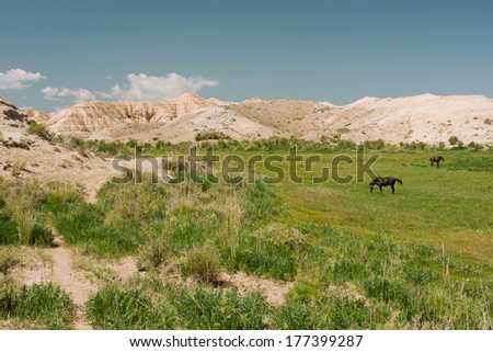 Horses graze on the meadow near the mountains at the bright day with blue sky over
