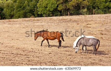 Horses grazing in a field of hay - stock photo