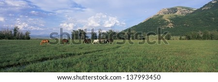Horses grazing in a pasture - stock photo