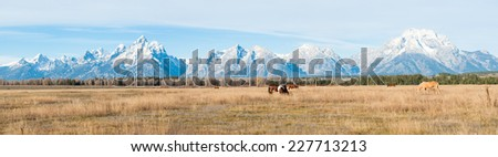 Horses grazing in Grand Teton National Park, USA