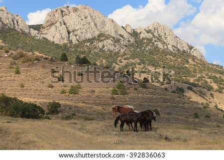 Horses grazing in mountains of Crimea