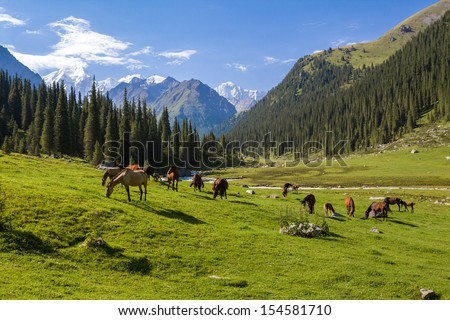 Horses grazing in mountains of Tien Shan, Kyrgyzstan - stock photo
