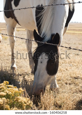 Horses grazing in the field. - stock photo