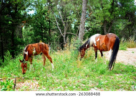 Horses grazing in the forest - stock photo