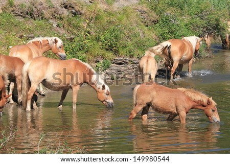 horses grazing in the mountains - stock photo