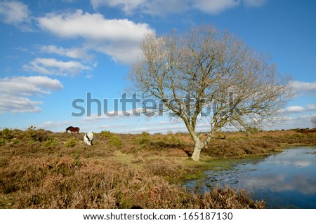 Horses grazing near pond and tree in New Forest, Hampshire, UK - stock photo