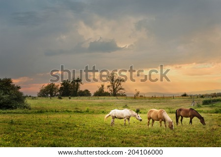 horses grazing on a farm at sunset - stock photo