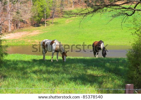Horses grazing on a hill side in Tennessee
