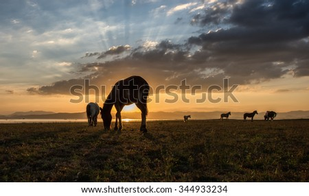 Horses grazing on pasture at sundown