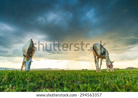 horses grazing on pasture at sundown in orange sunny beams