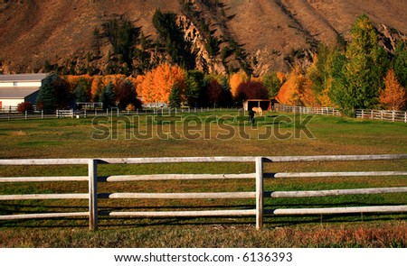 Horses grazing on peaceful autumn morning in Idaho