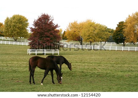 Horses grazing on the farm