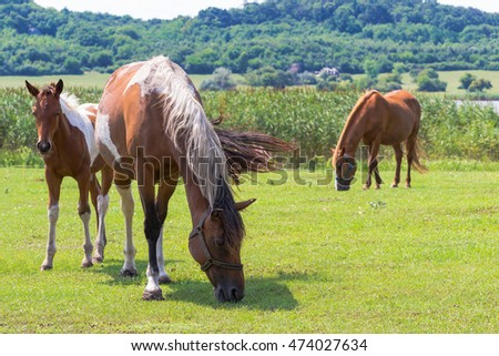 Horses Grazing on The Field Near a Lake