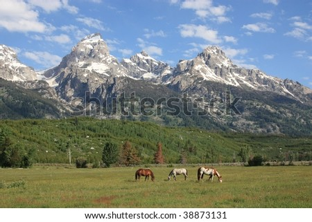 Horses grazing the Grand Tetons Valley
