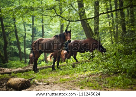 horses group in green forest - stock photo