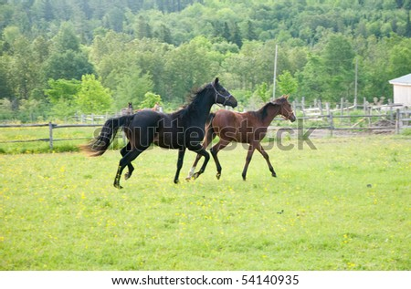 Horses having fun