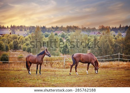 Horses herd in autumn field - stock photo